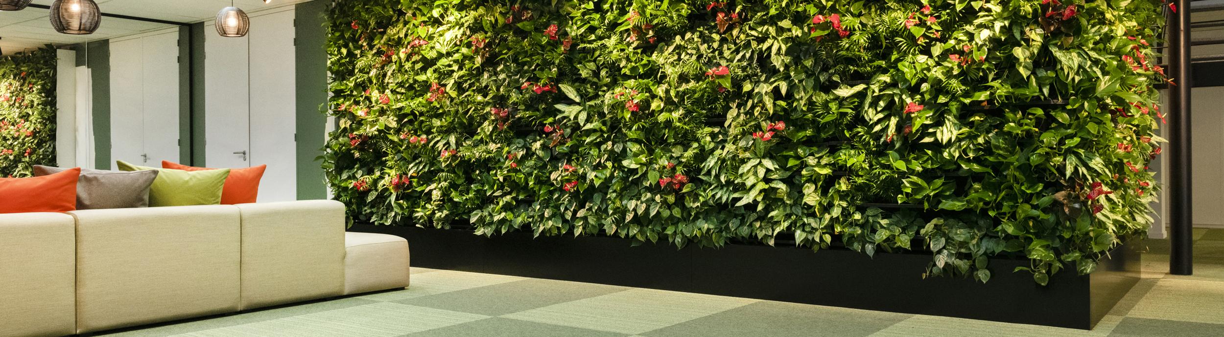 Plante Sur Les Murs green concept: le spÉcialiste des plantes d'intÉrieur, des